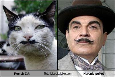 poirot moustache cat