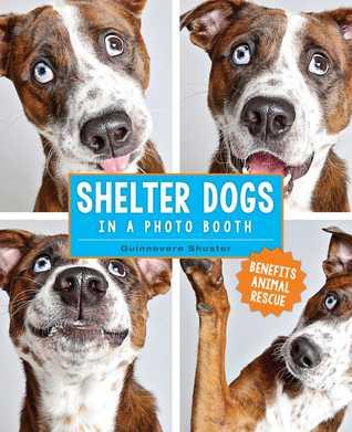 shelter dogs.jpg