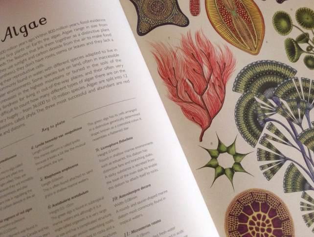 botanicum-page-spread-2