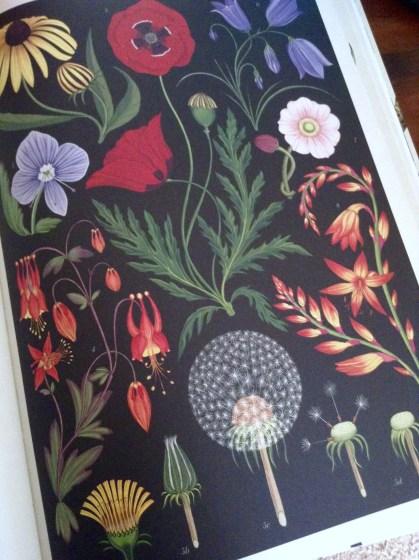 botanicum-wildflowers
